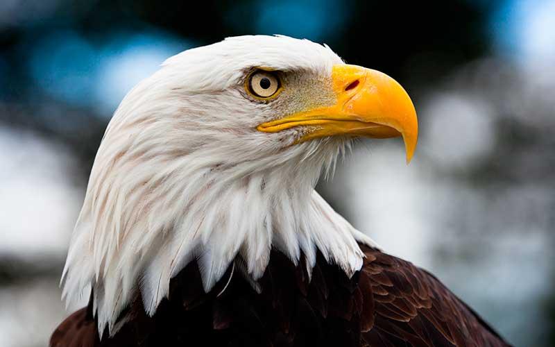 El Águila Pastor Garcia