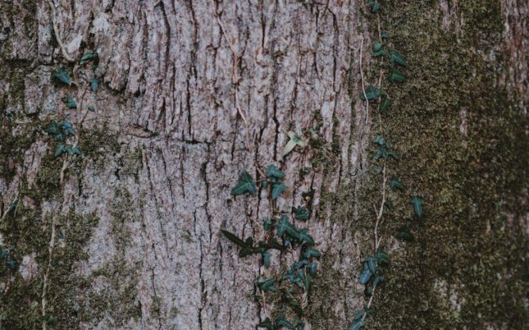 The Messiah Tree