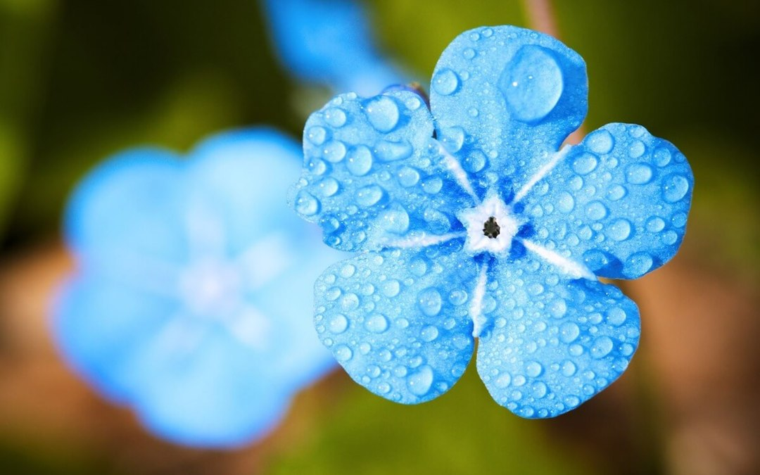 special day blue flower