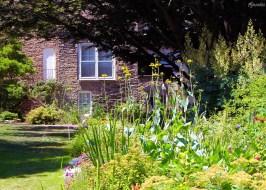 Densely planted garden
