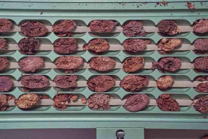 Cacao's Chocolate Factory in Ecuador