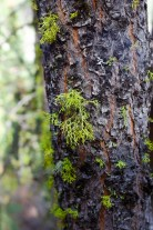 Mossy Tree hiking camas creek trail no. 125 to camas lake in montana