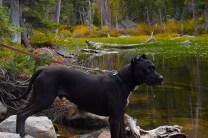 black pitbull on rocks while hiking Camas Creek Trail to Camas Lake Montana