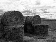 Hay for Winter