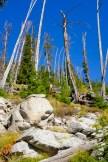 woodland skyline bitterroot national forest montana