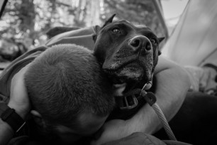 enjoying nap time cuddles with our pitbull deisel the mountain dog