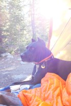 diesel the mountain dog enjoying the view outside our big agnes slater 4 tent