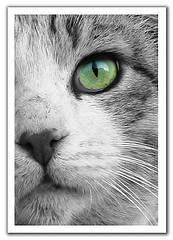 Here Kitty-Kitty