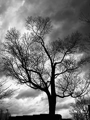 tornado-tree