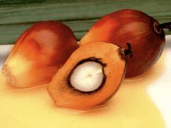 Esse é o coco que dá origem ao azeite de dendê. É tudo coco, com todas as maravilhosas propriedades que já publiquei aqui no site.