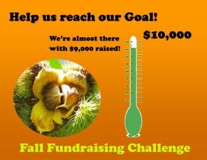 website-image-for-fundraiser