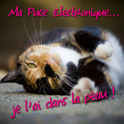 chat-puce-electronique-obligatoire-2012