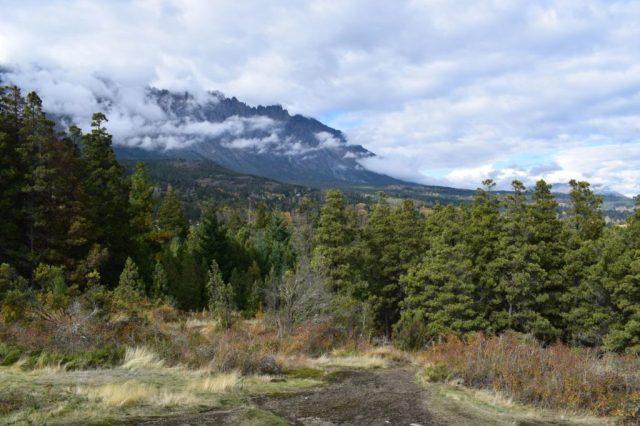 bosque en el Cerro Amigo
