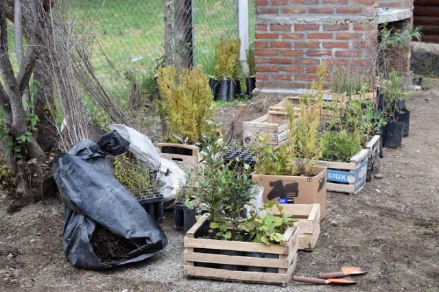 Todas las especies de plantines, en sus respectivos cajones, antes de ser colocados.
