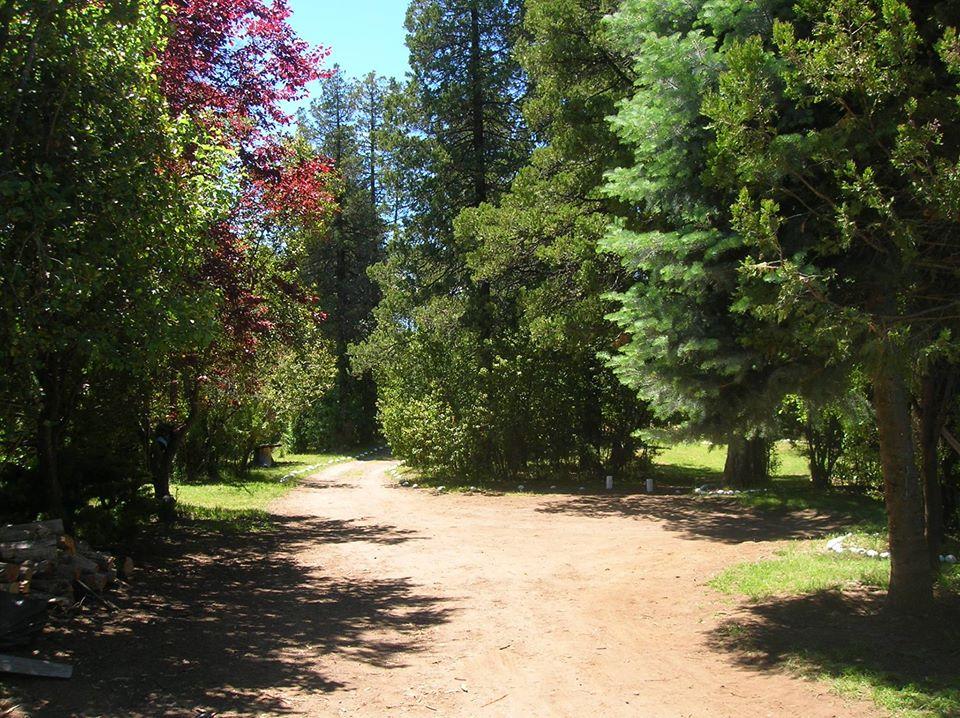 Bosque del camping Ave Fénix en El Bolsón