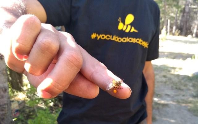 Hombre mostrando una abeja posada en su dedo.