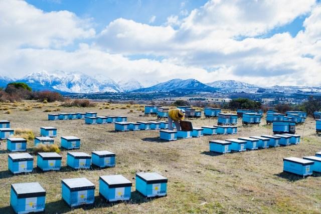 Apiarios de abejas donde se realiza la miel más austral del país, Esquel.