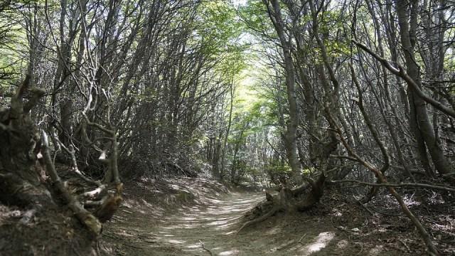 Uno de los senderos de la importante red con la que cuenta El Chaltén.