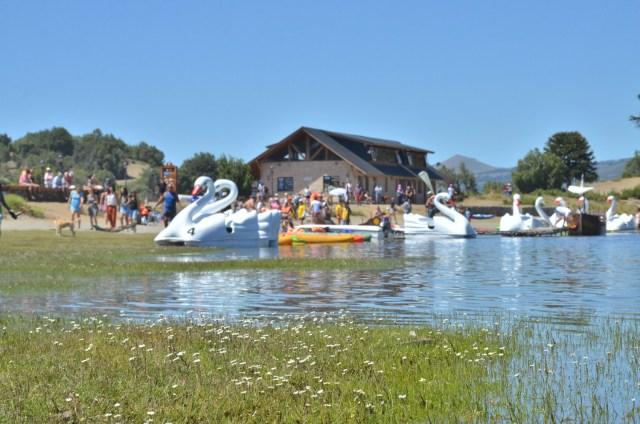 Botes con forma de cisnes en el lago.