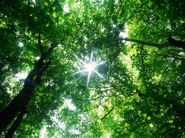 Árboles, principales generadores de oxígeno. Cuarentena en el planeta.