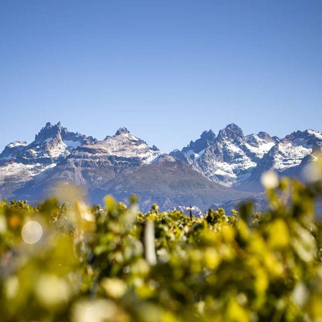 Trevelin, pinot noir, vino patagónico