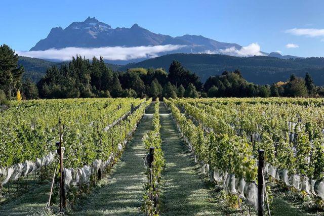 Trevelin primera zona geográfica vitivinícola de Chubut.