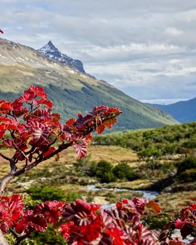 Lenga en la Patagonia.