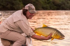 Golden Dorado, Patagonia Fly Fisherman