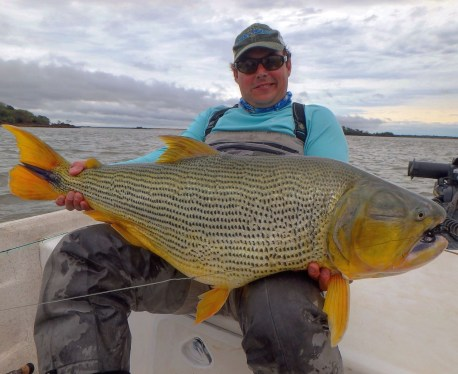 golden dorado fishing Patagonia Fly Fisherman