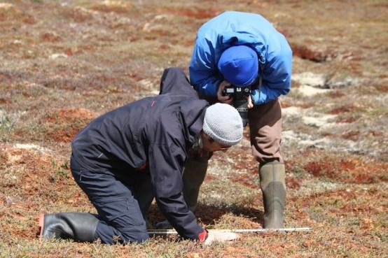 Examining water table depth monitoring rods...
