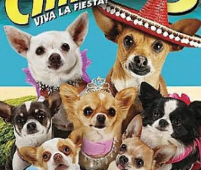 Beverly Hills Chihuahua 3 Viva La Fiesta At The Keefe Community Center
