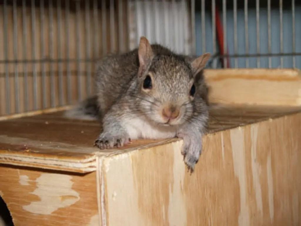 animal control report squirrel