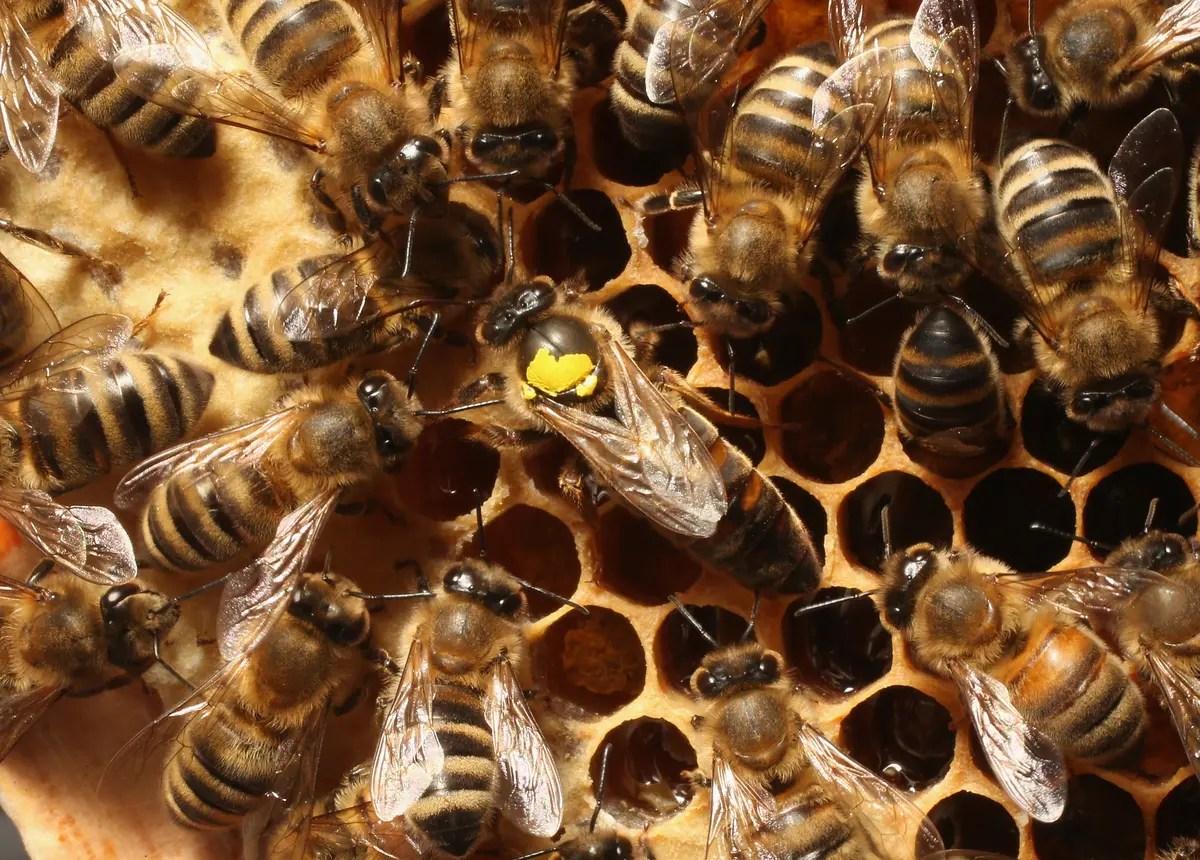 see 35 000 bees