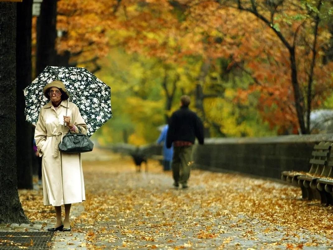 fall foliage in ny