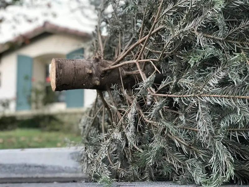 storm debris collection announced in