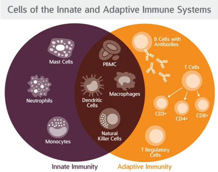 https://i0.wp.com/patch.com/img/cdn20/users/22916212/20190311/111445/styles/raw/public/processed_images/blog-difference-between-innate-and-adaptive-immunity-astarte_1-1552316647-6672.jpg?w=696&ssl=1