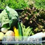 2021年05月旬彩野菜バスケット