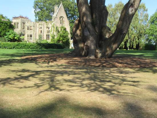 Nymans tree shadows by Allison Reid