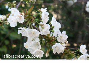 foto impresa sobre tela cerezo en flor