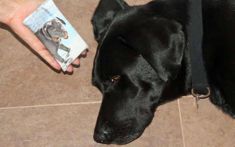 funda móvil con foto de mi perro labrador