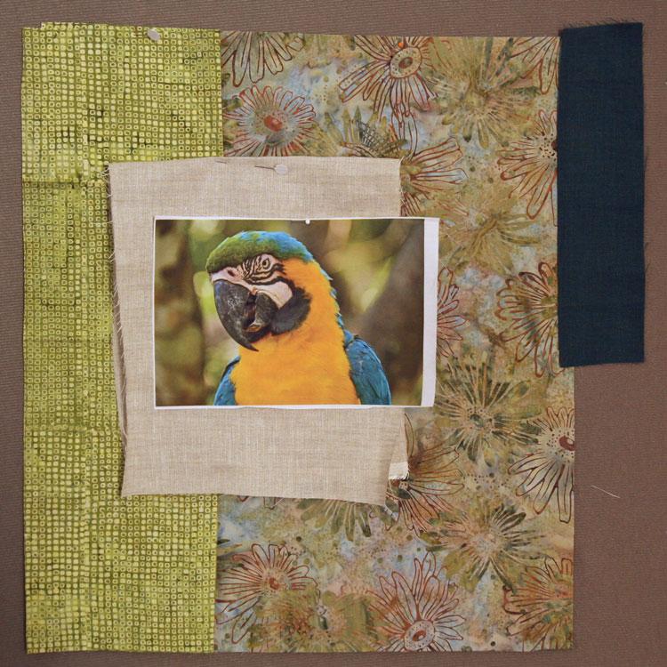 parrot-compo1