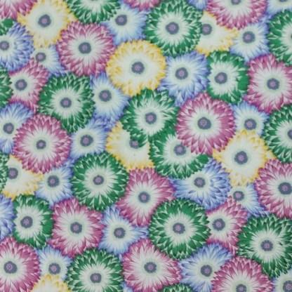Chrysanthemums - Serene
