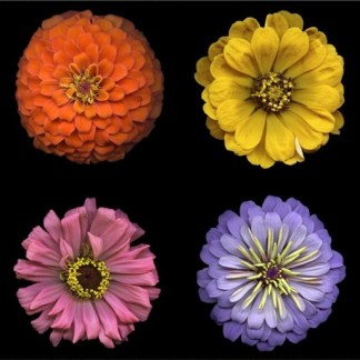 Flower Power Panel Y3050-55