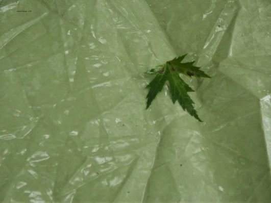 Rain and green