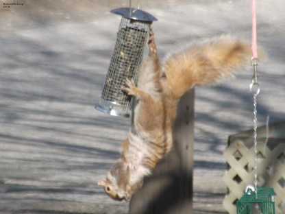 squirrel feeder 1