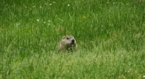 Ground hog 3