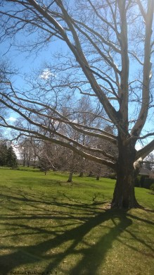 Tree shadow2