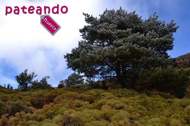 Vegetación en el Monte Peiró