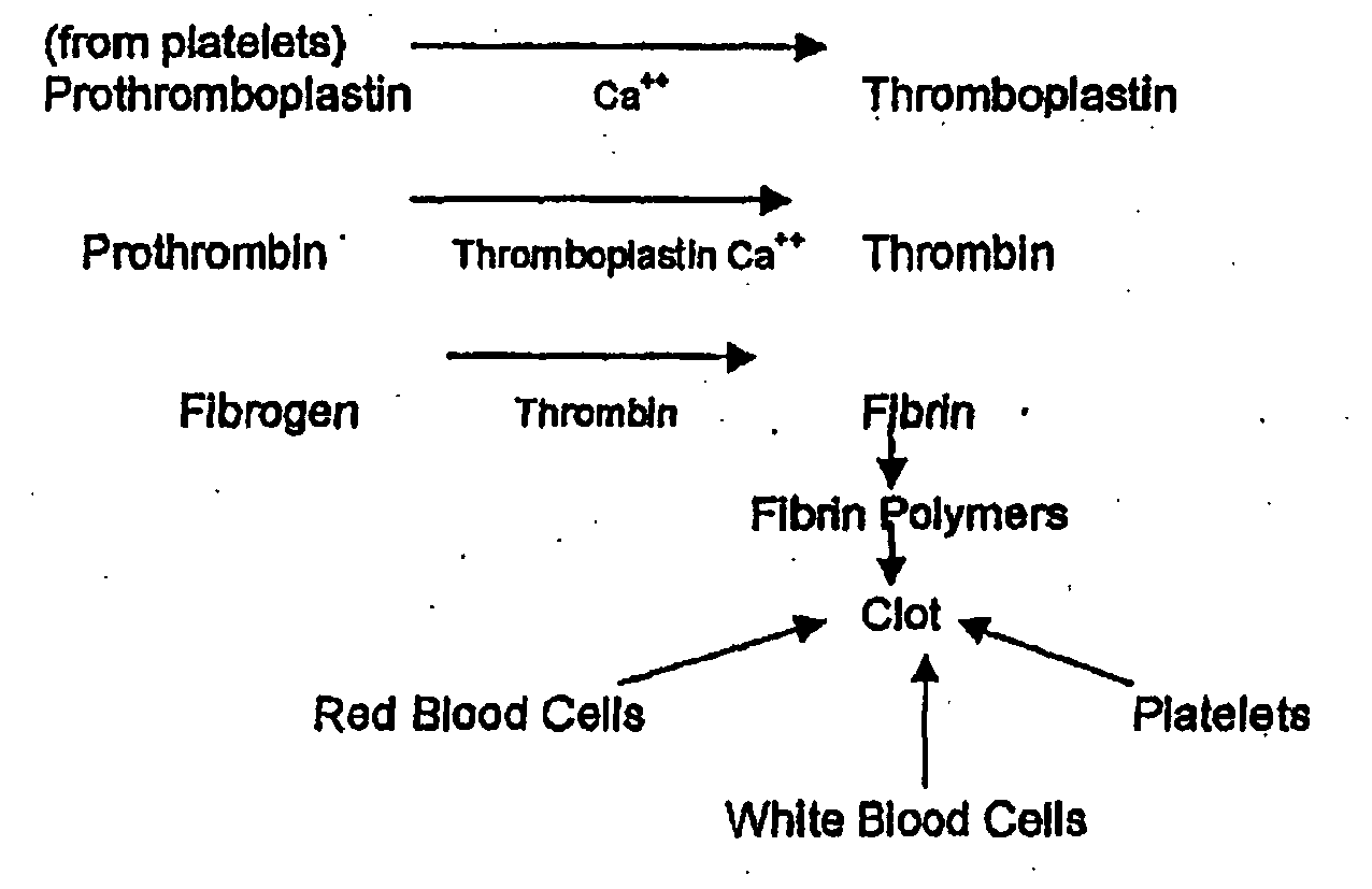 Blood Clotting Process Steps Pictures To Pin