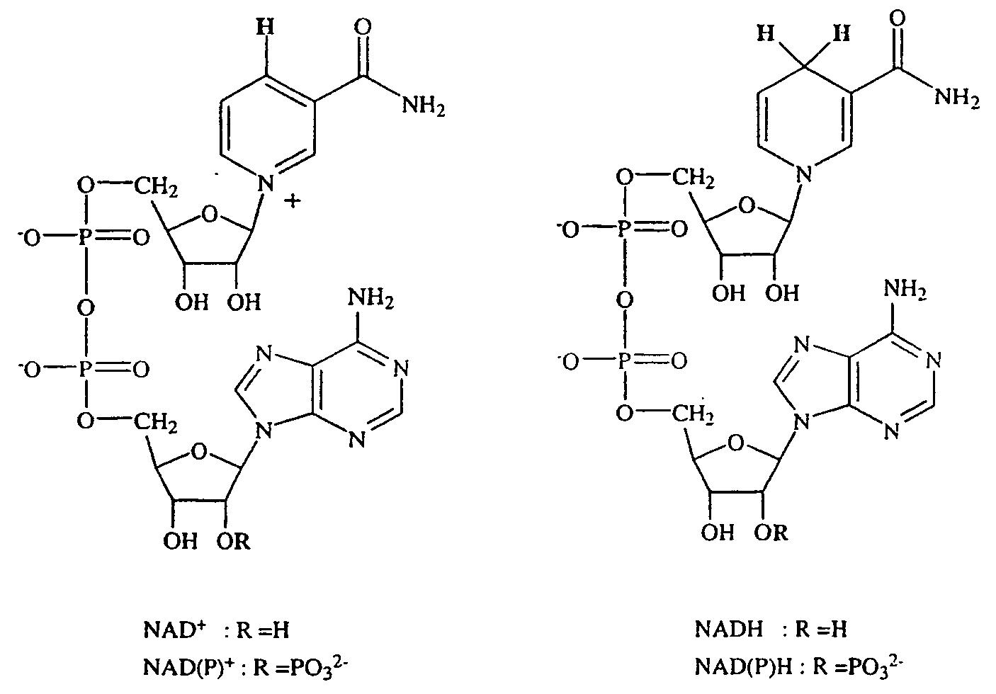 Nadh Nadph Oxidoreductases Oxidoreductases Nadh Nadph